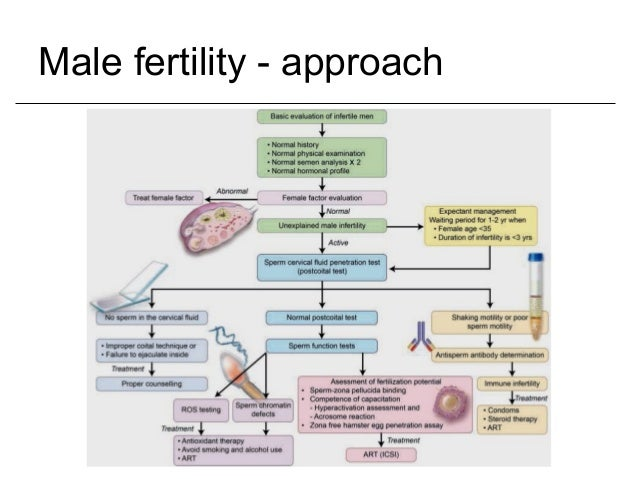 Male infertility and its treatment 1