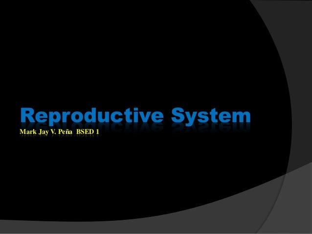 Reproductive System Mark Jay V. Peña BSED 1