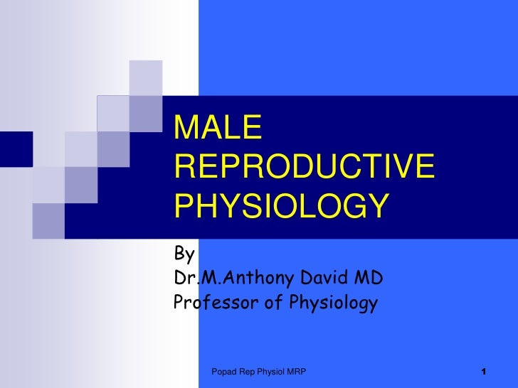 Popad Rep Physiol MRP<br />1<br />MALE REPRODUCTIVE PHYSIOLOGY <br />By<br />Dr.M.Anthony David MD<br />Professor of Physi...