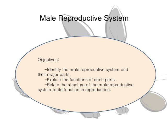 discuss the male reproductive system Find information about the male reproductive system from the cleveland clinic,  including functions of the  what are the external male reproductive structures.