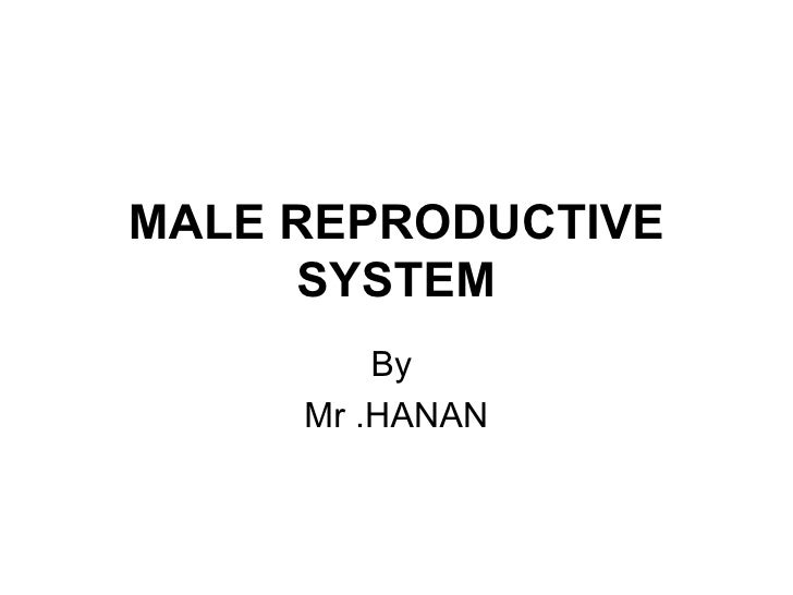 MALE REPRODUCTIVE     SYSTEM         By     Mr .HANAN