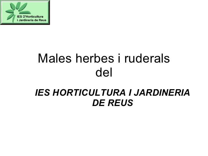 Males herbes i ruderals del IES HORTICULTURA I JARDINERIA DE REUS