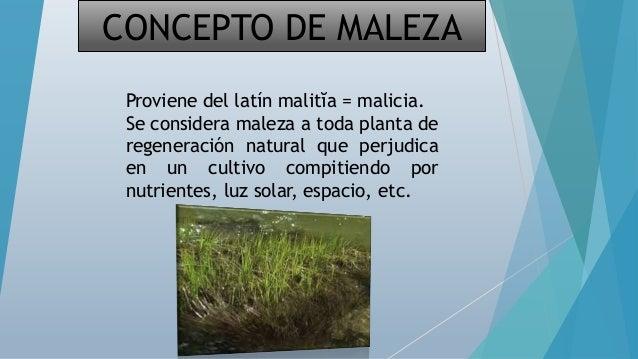 Malezas en cultivos de extensivos for Que son cultivos asociados