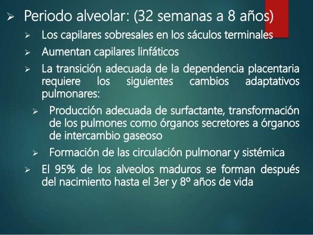  Periodo alveolar: (32 semanas a 8 años)