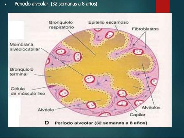 MALFORMACIONES CONGENITAS DE LAS VIAS RESPIRATORIAS INFERIORES 1. AGENESIA APLASIA PULMONAR E HIPOPLASIA PULMONAR 2. MALFO...