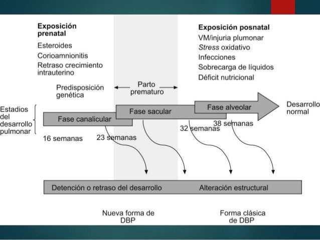 Embriología  4ta semana: DIVERTÍCULO RESPIRATORIO Ac. Retinoico TBX4  Revest. interno: origen endodermico  Tej. Cartila...