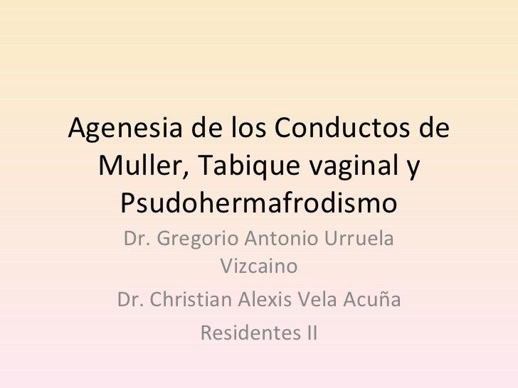 Agenesia de los Conductos de Muller, Tabique vaginal y Psudohermafrodismo Dr. Gregorio Antonio Urruela Vizcaino Dr. Christ...