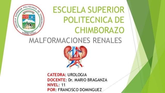 ESCUELA SUPERIOR POLITECNICA DE CHIMBORAZO MALFORMACIONES RENALES CATEDRA: UROLOGIA DOCENTE: Dr. MARIO BRAGANZA NIVEL: 11 ...
