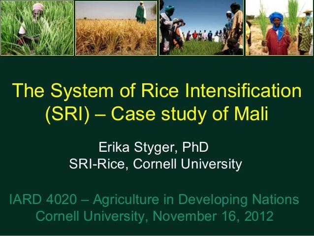 The System of Rice Intensification   (SRI) – Case study of Mali             Erika Styger, PhD         SRI-Rice, Cornell Un...