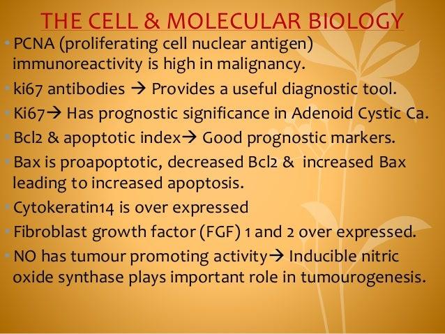THE CELL & MOLECULAR BIOLOGY •PCNA (proliferating cell nuclear antigen) immunoreactivity is high in malignancy. •ki67 anti...