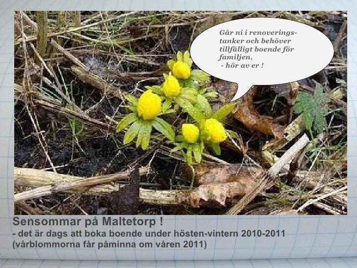 Sensommarpå Maltetorp !  - det är dags att boka boendeunder hösten-vintern 2010-2011 (vårblommorna får påminna om våren ...