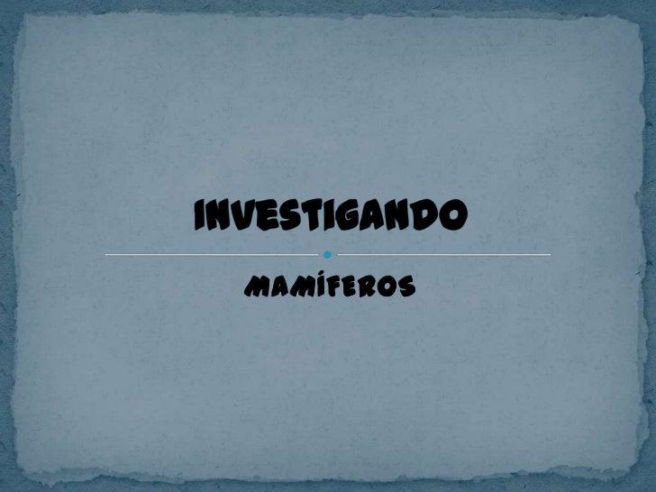MAMÍFEROS<br />Investigando<br />