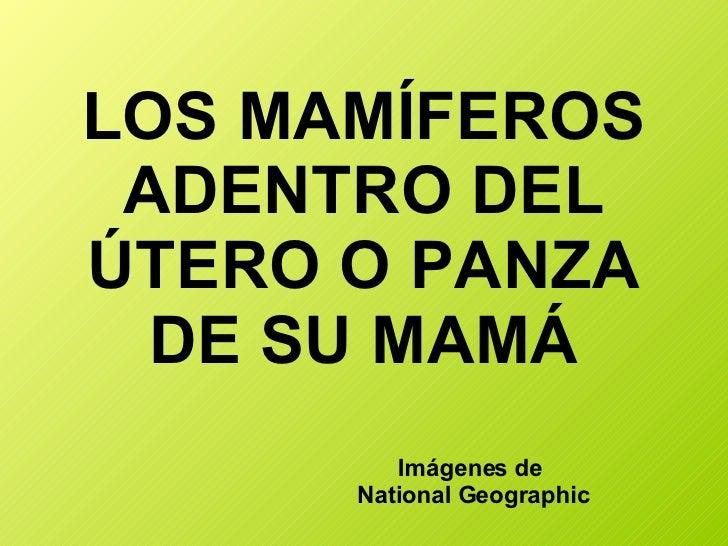 LOS MAMÍFEROS ADENTRO DEL ÚTERO O PANZA DE SU MAMÁ Imágenes de  National Geographic