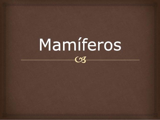  Os mamíferos constituem o grupo mais evoluído do Reino Animal. Receberam este nome devido à presença de glândulas mamár...