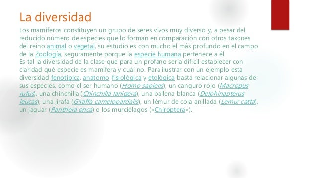 Mamíferos Slide 3