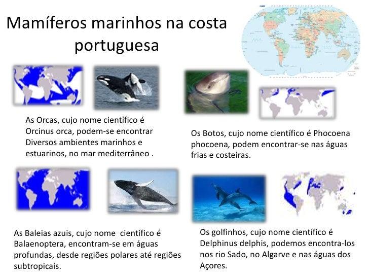 Mamíferos marinhos na costa       portuguesa   As Orcas, cujo nome científico é   Orcinus orca, podem-se encontrar        ...