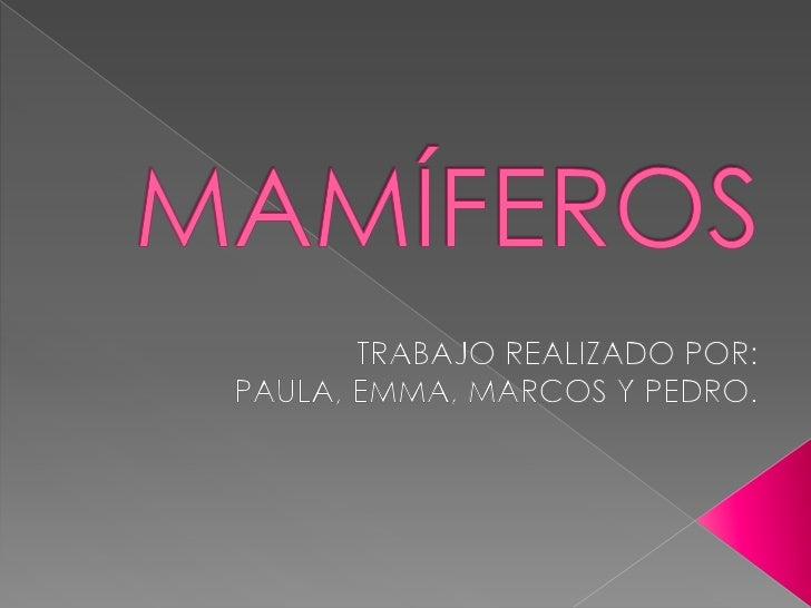MAMÍFEROS<br />TRABAJO REALIZADO POR: PAULA, EMMA, MARCOS Y PEDRO.<br />