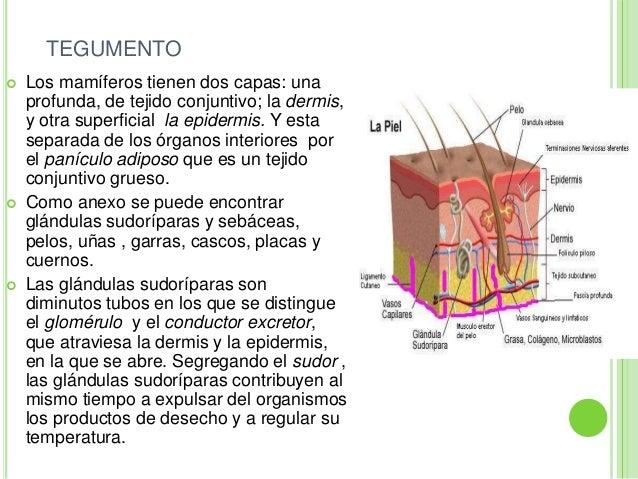 Mamíferos y su fisiología y anatomia