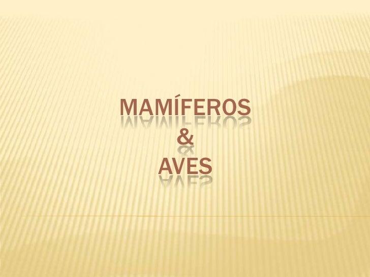Mamíferos&Aves<br />