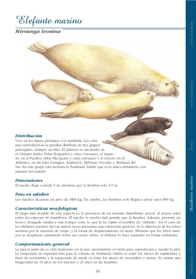 Mamiferos marinos fpn
