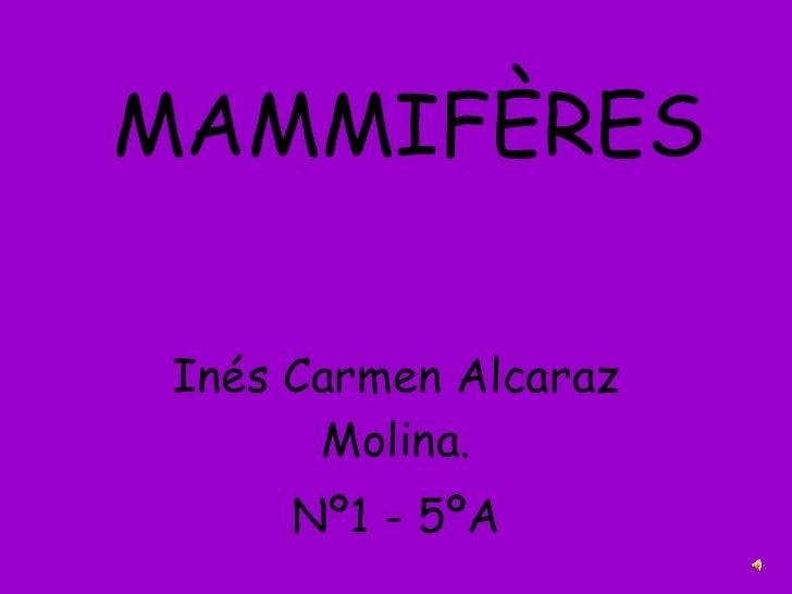 MAMMIFÈRES Inés Carmen Alcaraz Molina. Nº1 - 5ºA