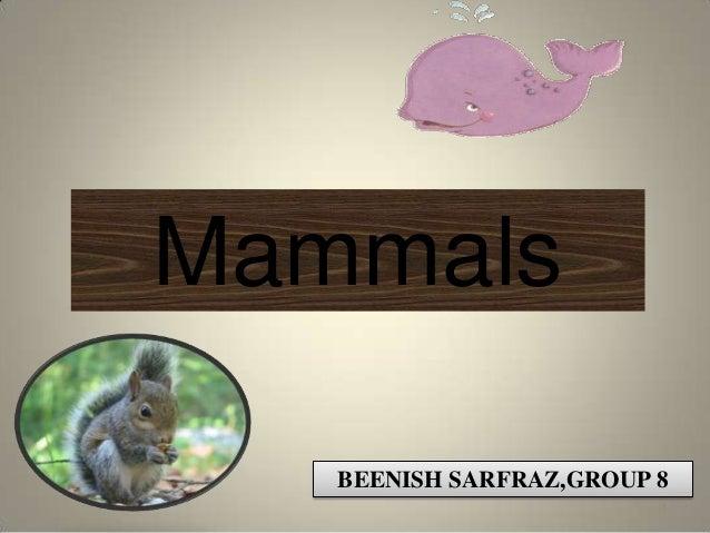 Mammals   BEENISH SARFRAZ,GROUP 8                         1