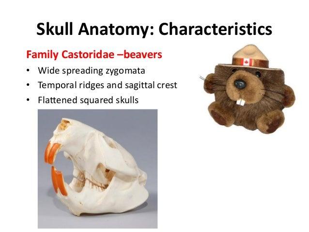 Mammal lab exam-revised2012