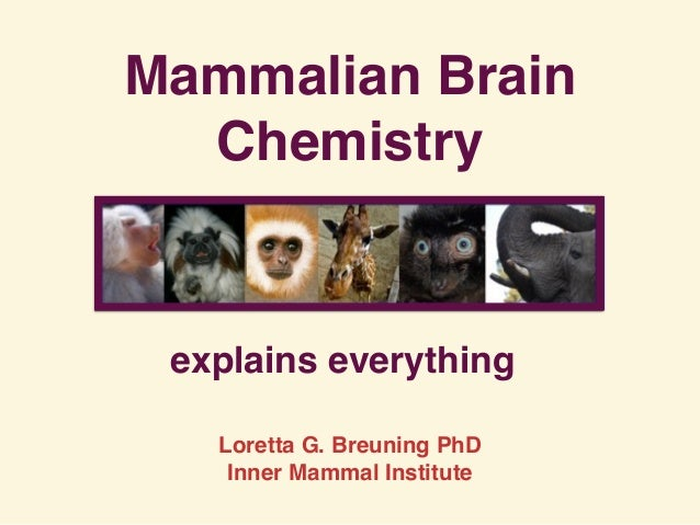 Mammalian Brain Chemistry explains everything Loretta G. Breuning PhD Inner Mammal Institute