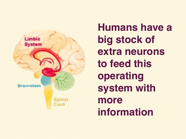 Humans have a big stock of extra neurons to feed this operating system with more information