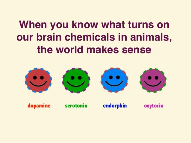 When you know what turns on our brain chemicals in animals, the world makes sense dopamine endorphin oxytocinserotonin