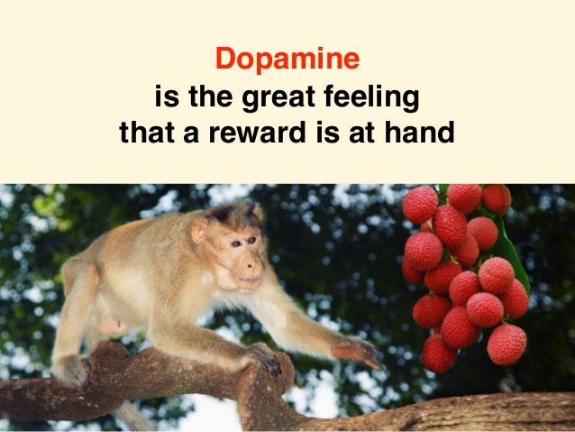 Dopamine is the great feeling that a reward is at hand