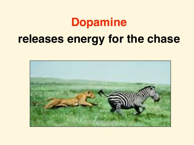 Dopamine releases energy for the chase