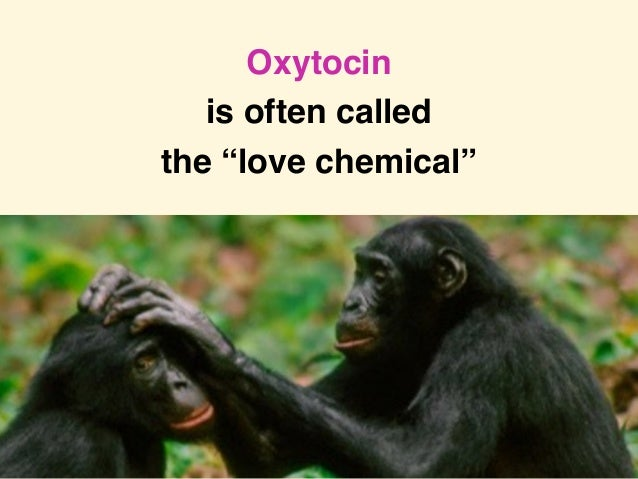 "Loretta Graziano Breuning PhD, Inner Mammal Institute Oxytocin is often called the ""love chemical"""