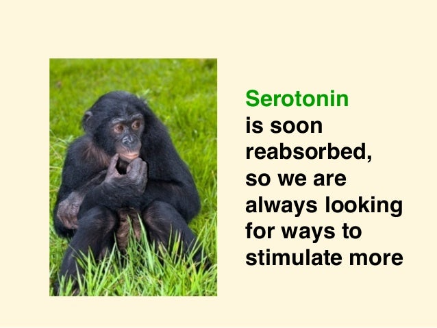 Serotonin is soon reabsorbed, so we are always looking for ways to stimulate more