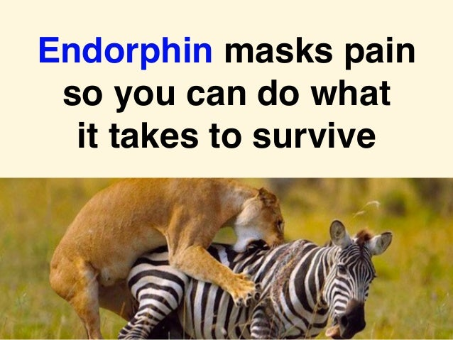 Endorphin masks pain so you can do what it takes to survive