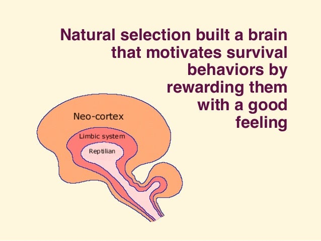 Natural selection built a brain that motivates survival behaviors by rewarding them with a good feeling
