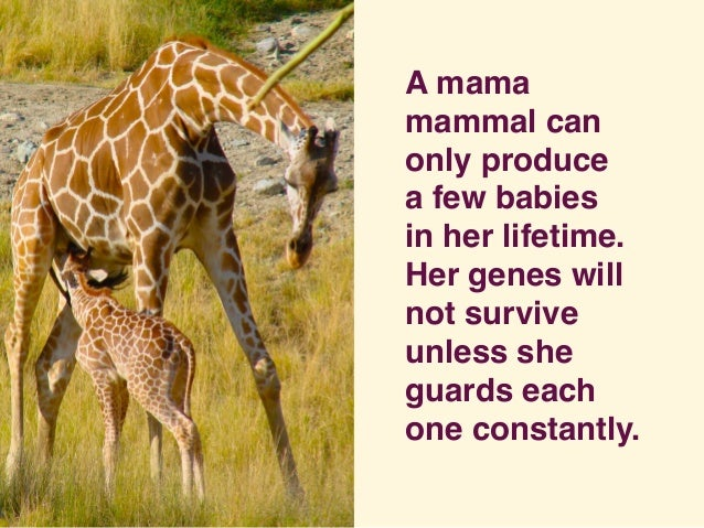 A mama mammal can only produce a few babies in her lifetime.