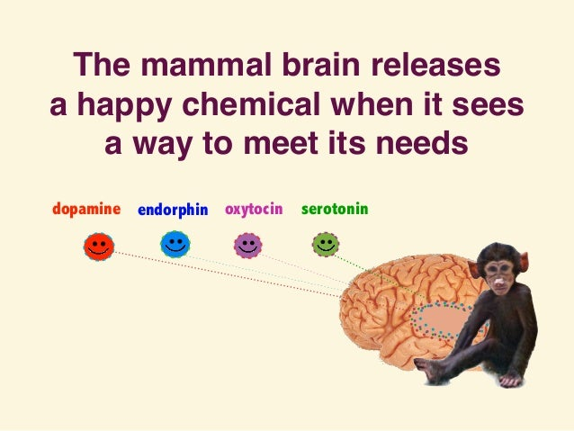 The mammal brain releases a happy chemical when it sees a way to meet its needs dopamine endorphin oxytocin serotonin