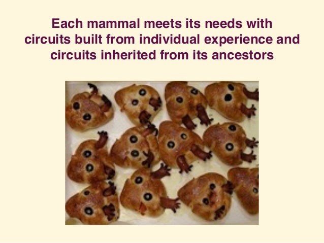 Each mammal meets its needs with circuits built from individual experience and circuits inherited from its ancestors