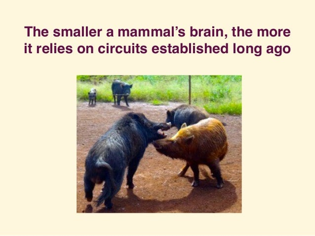 The smaller a mammal's brain, the more it relies on circuits established long ago