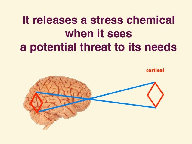 It releases a stress chemical when it sees a potential threat to its needs cortisol