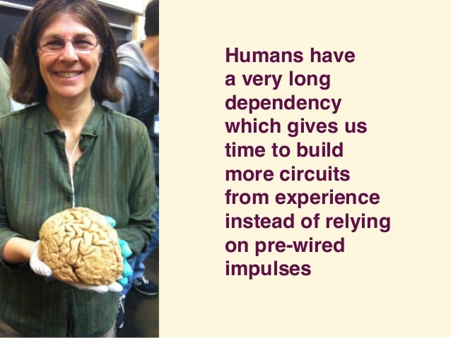 Humans have a very long dependency which gives us time to build more circuits from experience instead of relying on pre-wi...