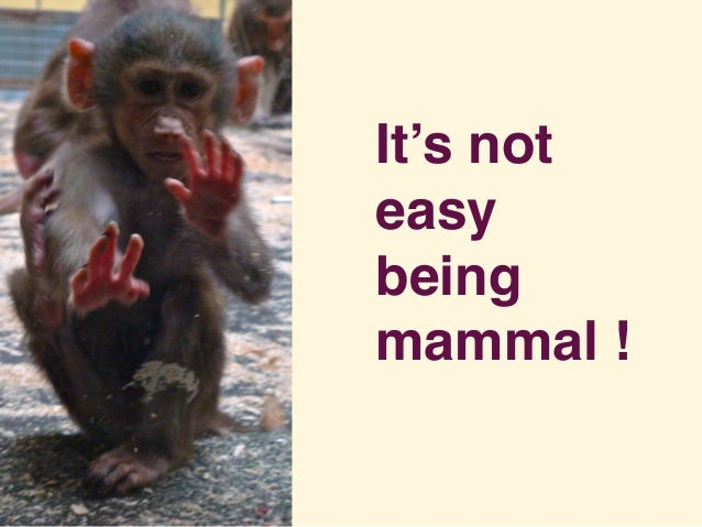 It's not easy being mammal !