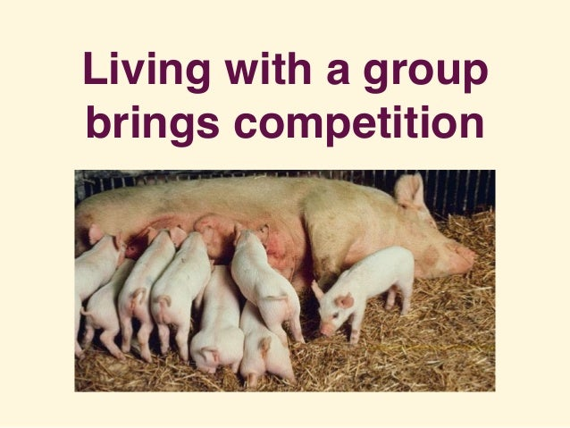 Living with a group brings competition