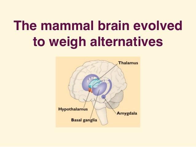 The mammal brain evolved to weigh alternatives