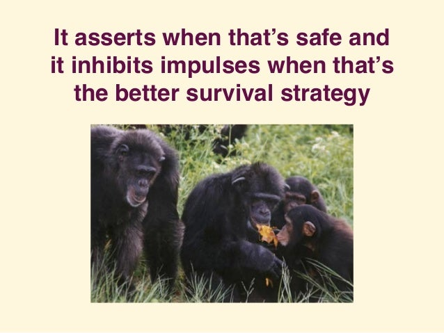It asserts when that's safe and it inhibits impulses when that's the better survival strategy
