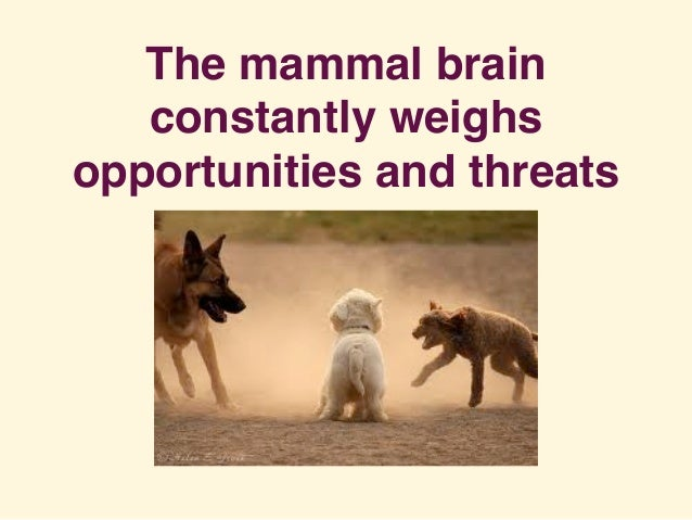 The mammal brain constantly weighs opportunities and threats