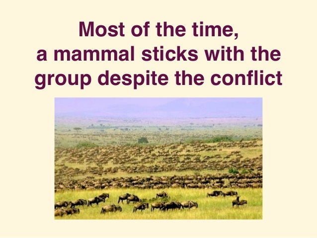 Most of the time, a mammal sticks with the group despite the conflict