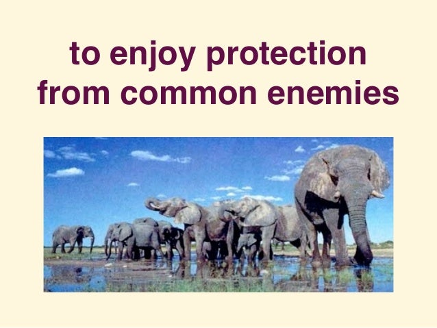 to enjoy protection from common enemies
