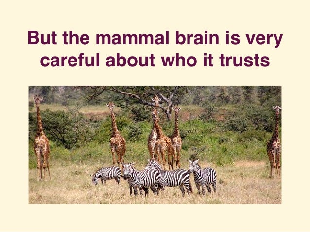 But the mammal brain is very careful about who it trusts